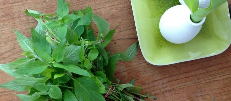 Teekräuter Salbei mit Blüte
