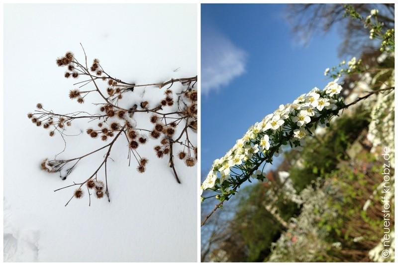 Büsche im Winter und im Frühling
