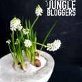 Urban Jungle Blogger - 1 plant 3 stylings