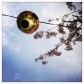 Lampion bei der Kirschblüte