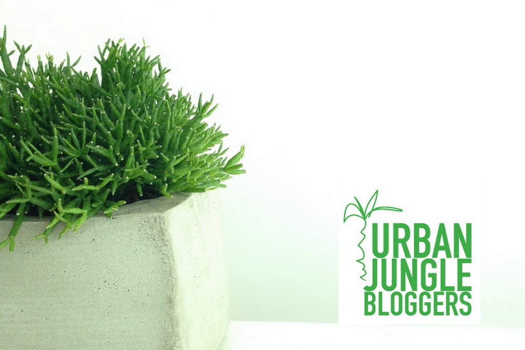 Concrete plant pots - urban jungle bloggers