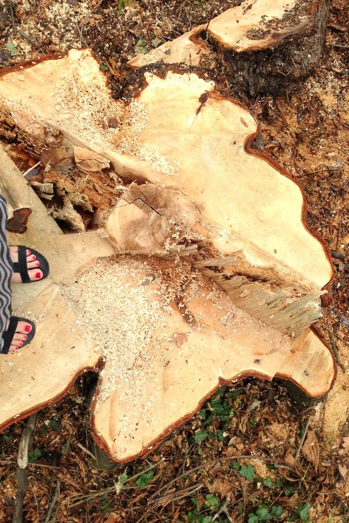 Baumstumpf nach dem Orkan