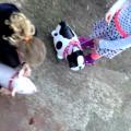 Airwalker Schwein und Hund - Folienballon