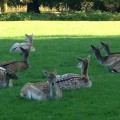 Wildpark Ferienprogramm Düsseldorf