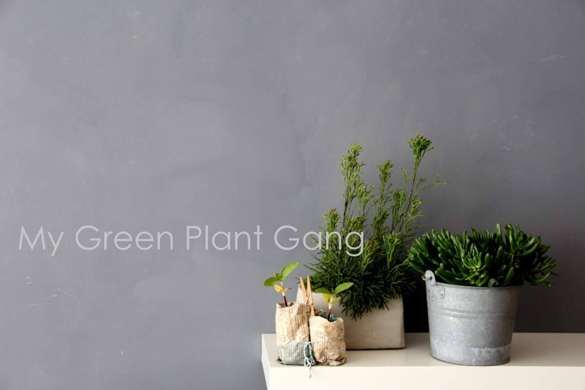 green plant gang - Zimmerpflanzen versammelt für die Urbanjunglebloggers