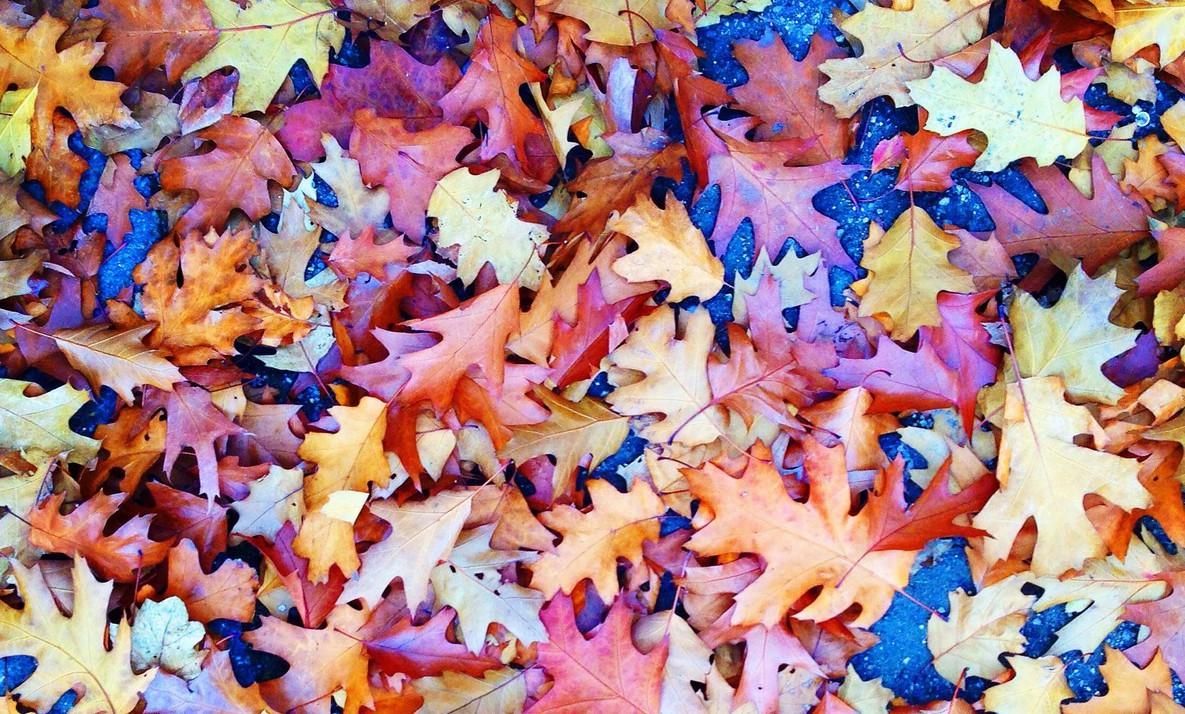Herbstlaub, Blätter im Oktober