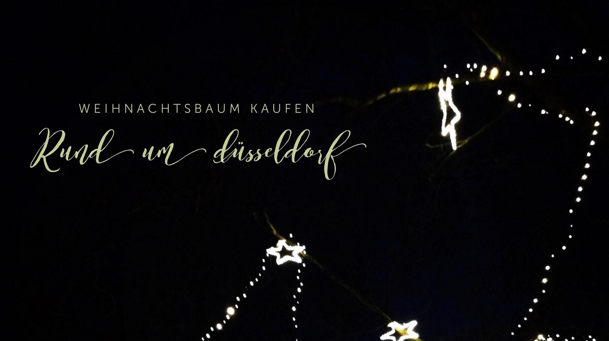 Weihnachtsbäume in Düsseldorf kaufen